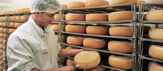 Affineur en train de tester un fromage